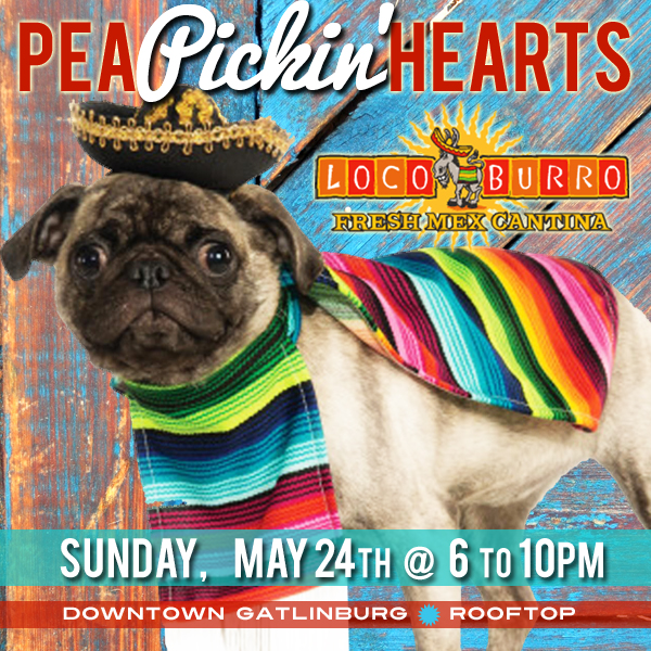 Hear the Pea Pickin' Hearts LIVE at Loco Burro in downtown Gatlinburg!
